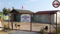 Alanya Köpek Oteli