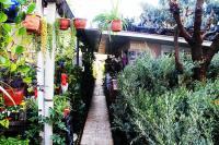 Alanya Mahmutlar Yerli Meyve fidanı Satışı