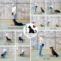 Alanya'da Köpeklere Pansiyon ve Eğitim Hizmeti Veren yer