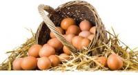 Günlük Taze Köy Yumurtası Bulunur