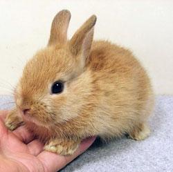 Yavru Tavşan Alanya